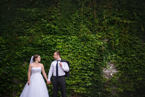 břečťan nevěsta a ženich foto